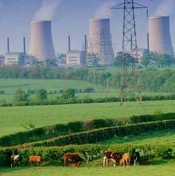 Cattle Grazing Near Nuclear Power Plant